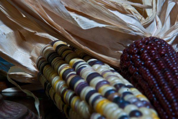 color corn