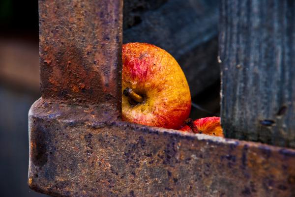 old apple bin