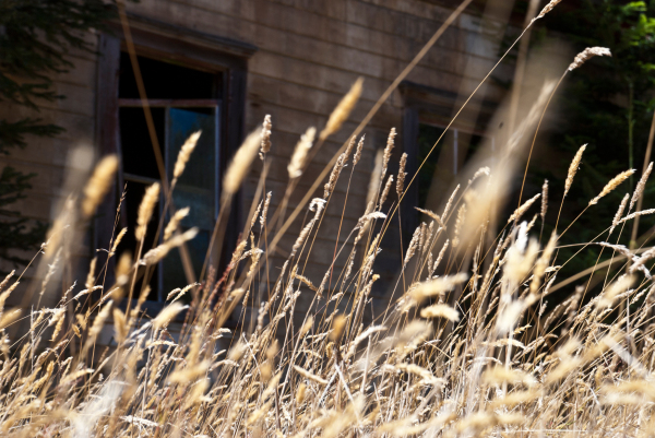 gold grass abandoned schoolhouse