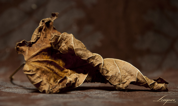 golden leaf on stenciled brown velvet