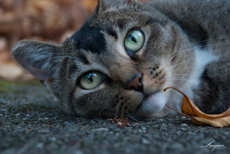 Cat sharing photo experience