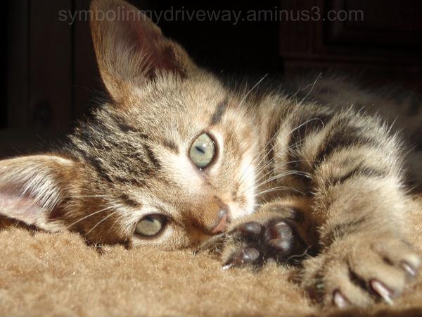 My cat Wesley