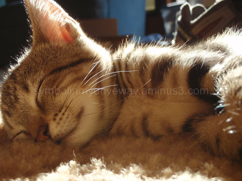 Afternoon Sunlit Nap
