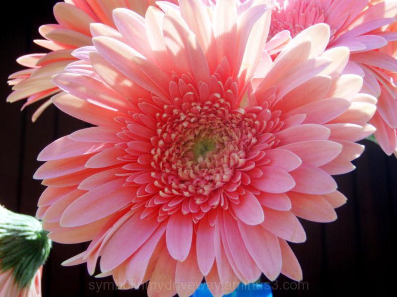 Rosy Pink Hues