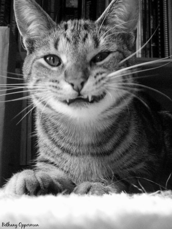 Smiling Cat, Black and White