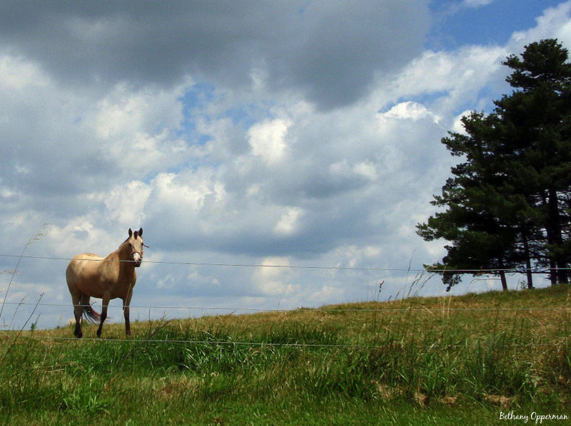 A horse in its pasture near Westphalia, Michigan