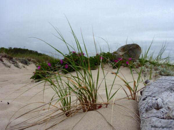 Sandy Neck Beach, Cape Cod, Massachusetts