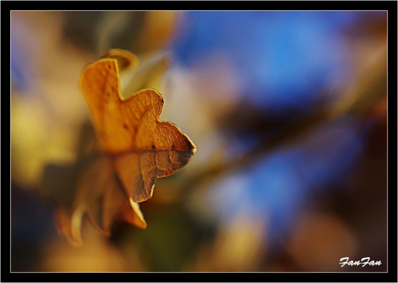 une feuille de chêne