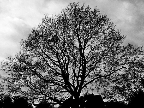 L'arbre au nid