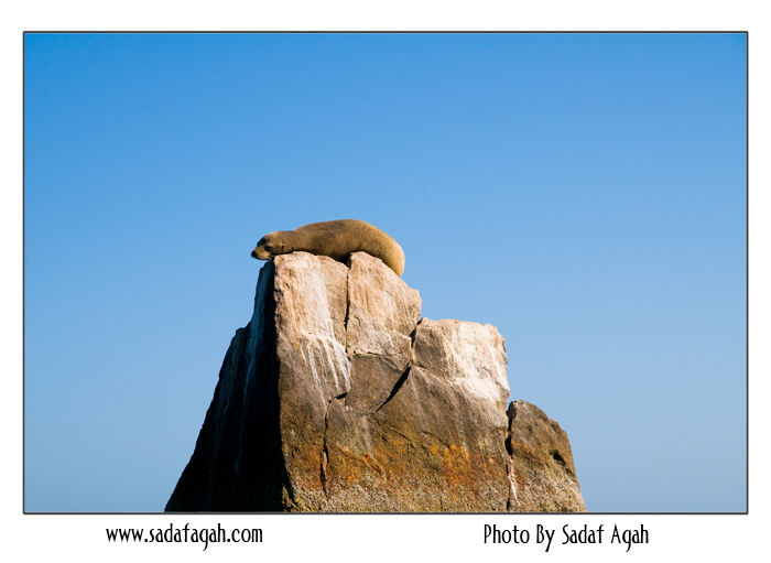 Lonely Sea Lion