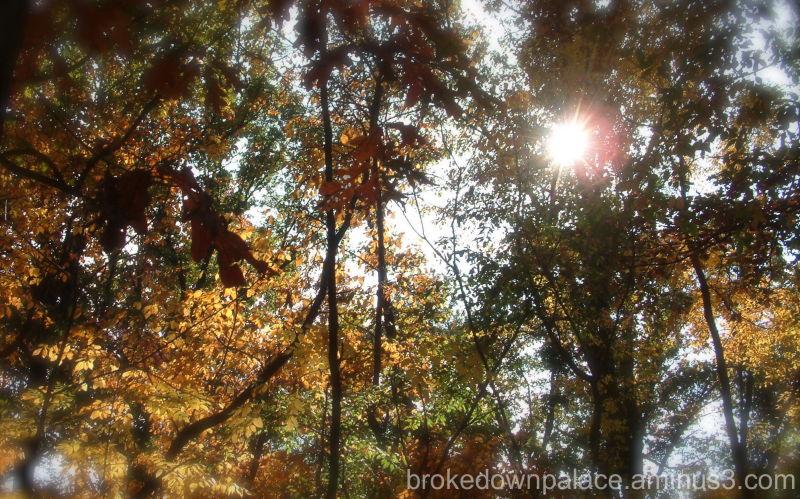 Foret park trail