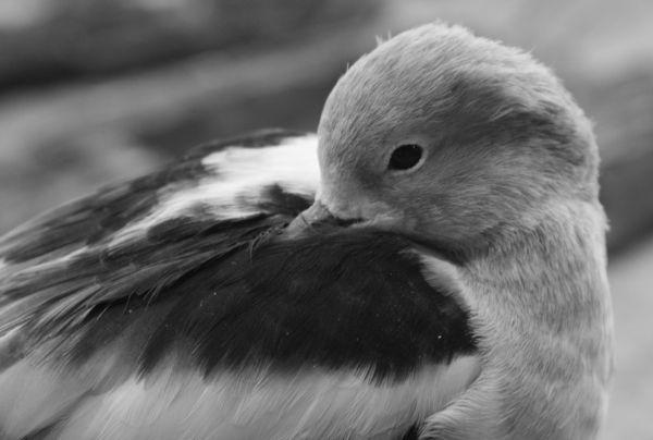 Bird resting