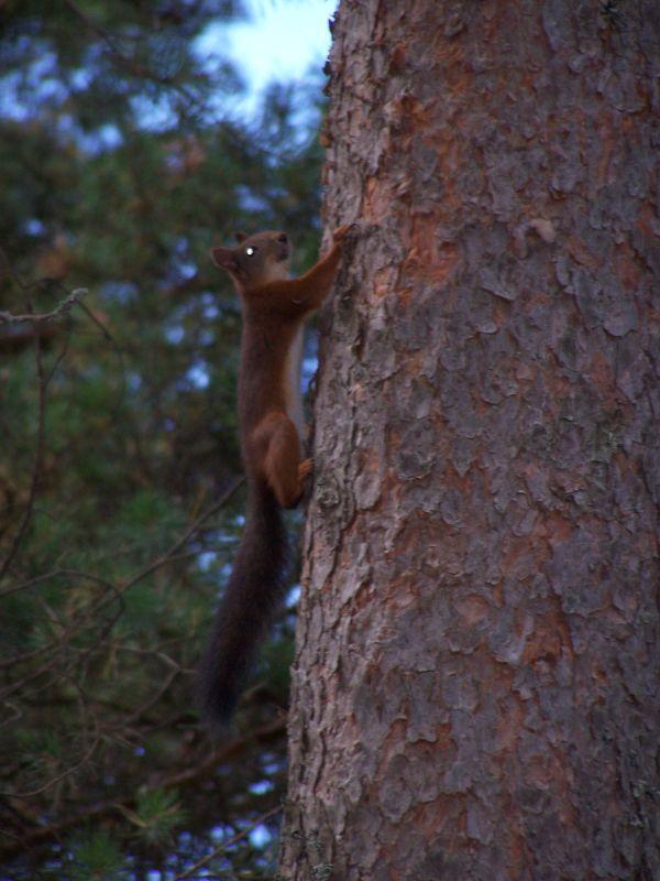 Orava # 2