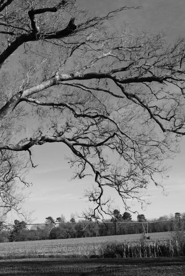 Branches N/B