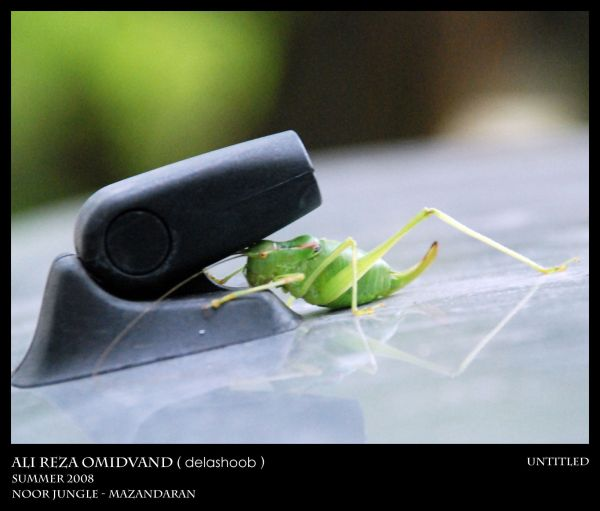 Animal on the car roof