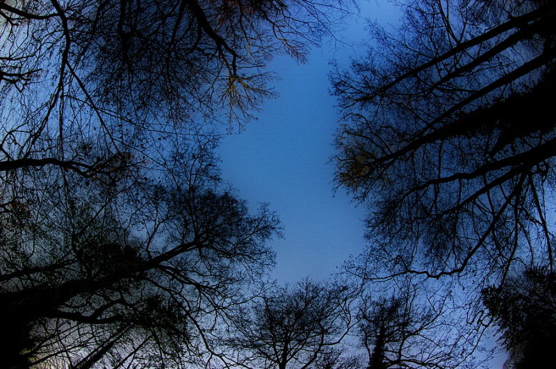 a fisheye view of sky from forest