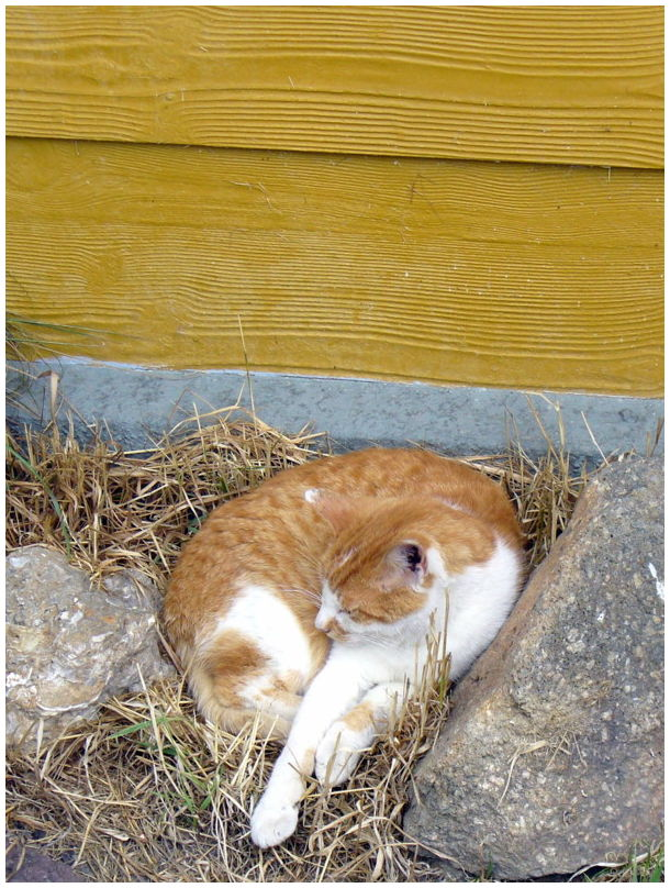 squatter sleeping