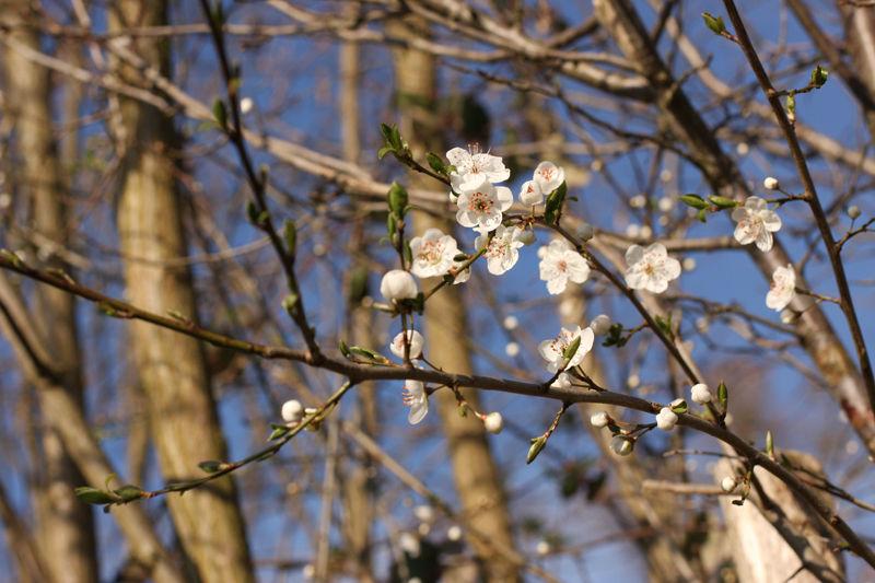 Le printemps est arrivé ...
