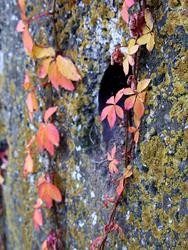 La feuille d'automne emportée...