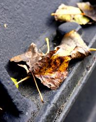 L'automne est là !