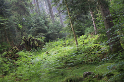 Au pays des Elfes