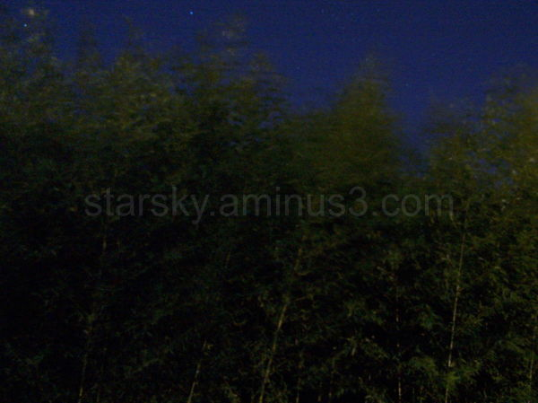 Bamboo waving at the night sky