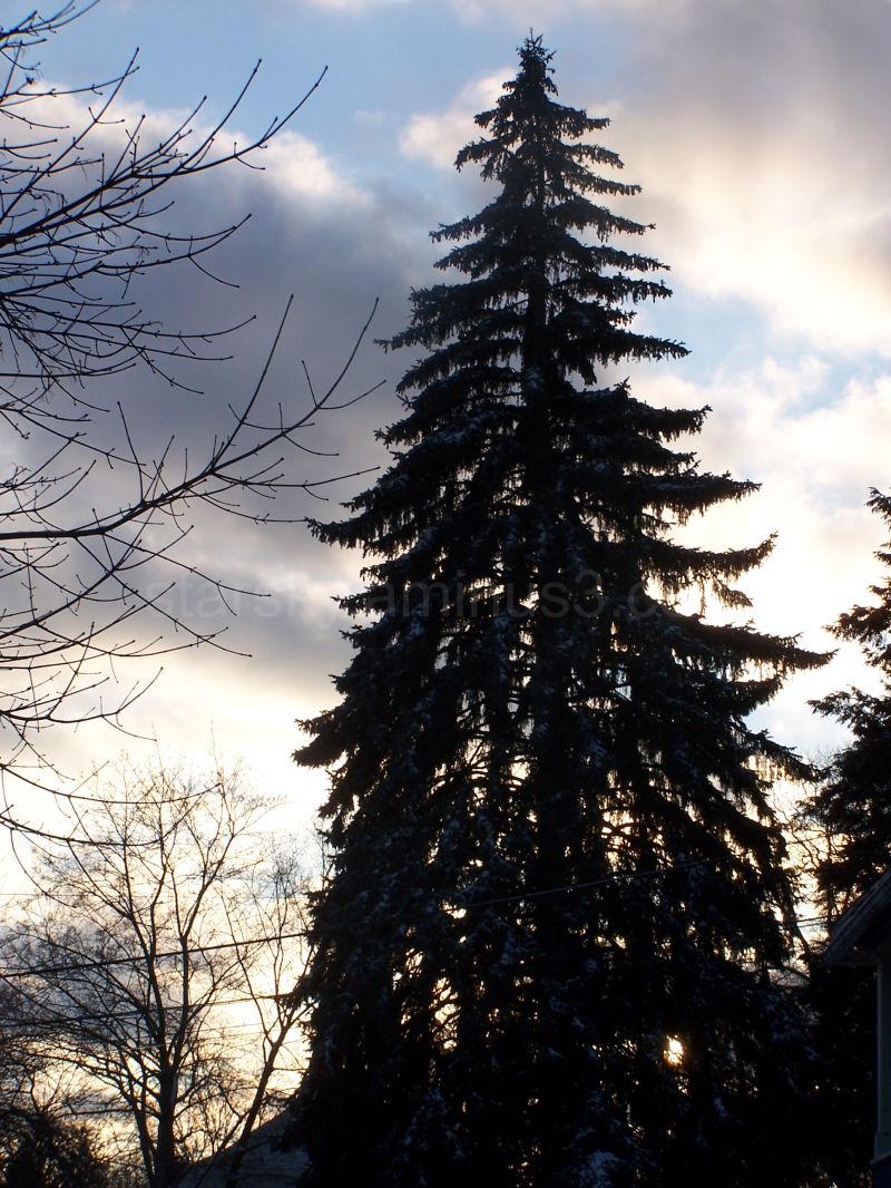 Winter in my hometown