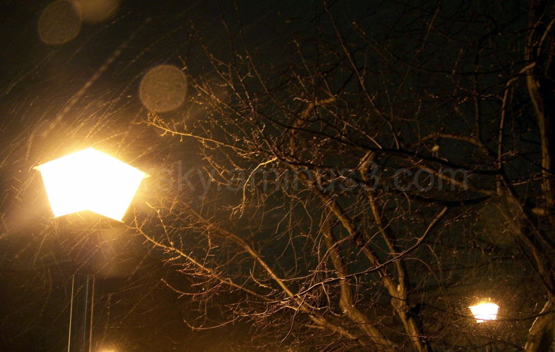 Streetlamps illuminate freezing trees