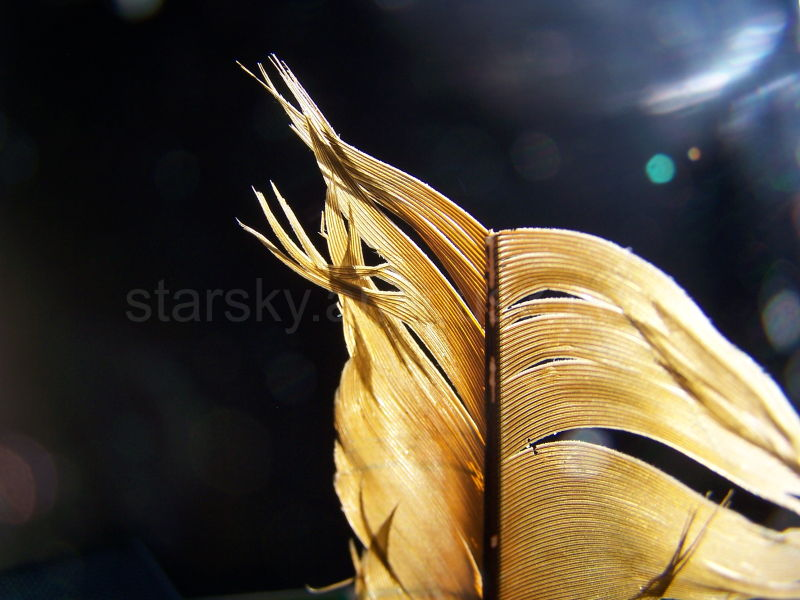 A feather in the sunlight