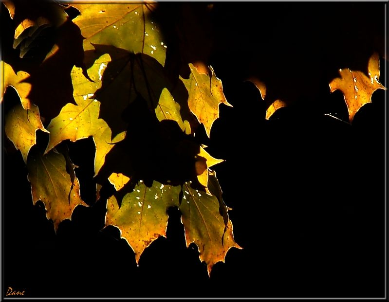 quelques feuilles au fil d'Octobre..