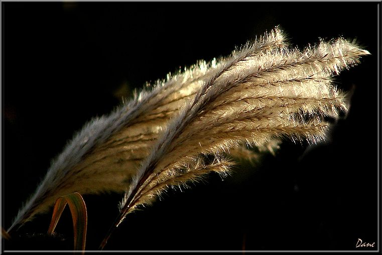 des rameaux balancés par le vent.