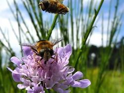 survol duo..nectar et fleurs