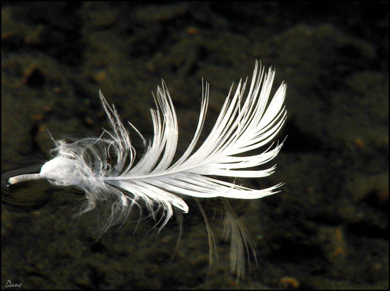 Pour écrire et dire...une plume au fil de l