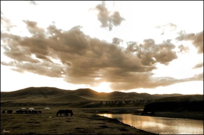 Dans le soir, les chevaux paissent doucement .