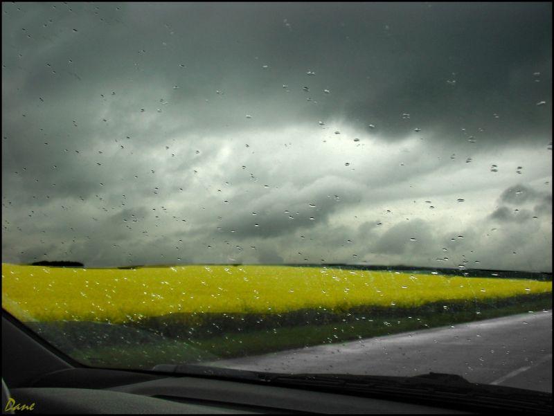 Colza et gouttes de pluie sur ciel noir..