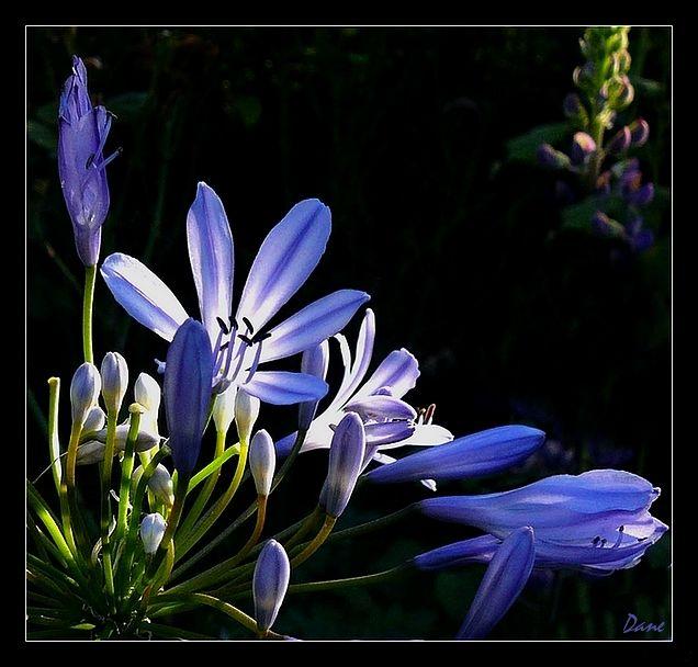 Au fond du jardin.. tout en bleue..