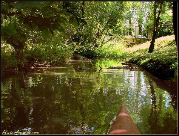 Petite aventure en mini Amazonie