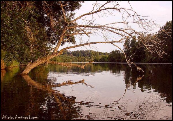 Entre l'arche des arbres   au fil du Cher  miroir