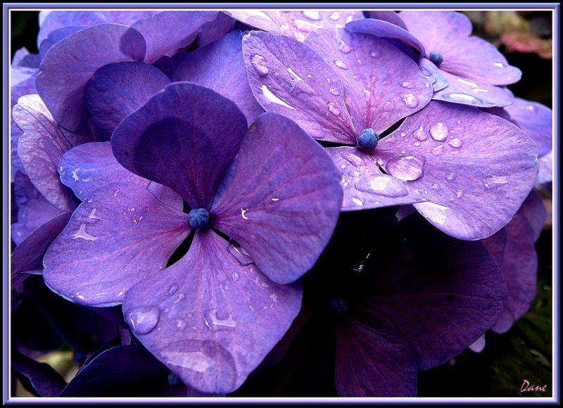 Après la pluie..