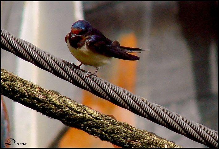 Oiseau sur les bords de Seine
