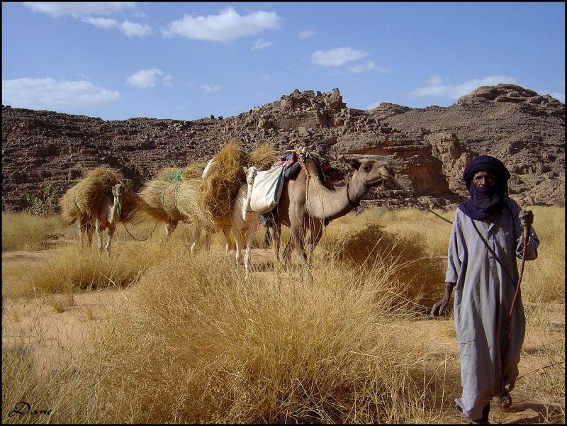 Rencontre dans le désert ..