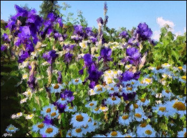 printemps en fleurs, iris et marguerites au jardin