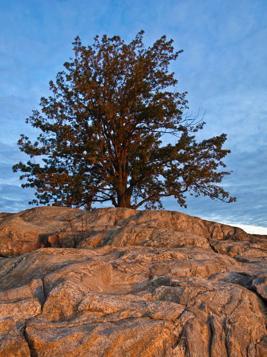 Sunrise Tree at Davenport Park