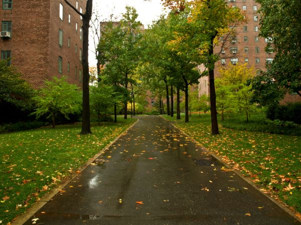 Rainy Fall Day in Stuyvesant Town