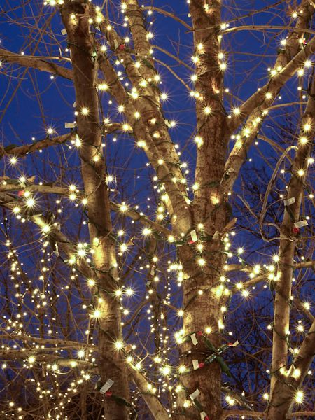 Starbursts Galore - Holiday Tree at Dusk