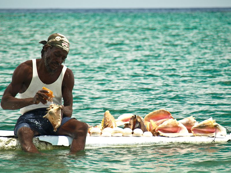 Conch Shell Salesman
