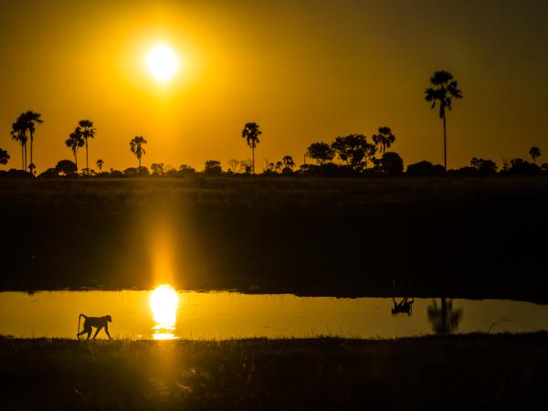 Hwange Sunset