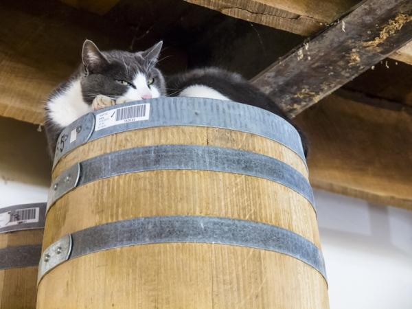 Bourbon the cat