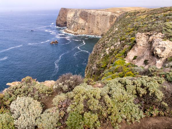 Cali: Channel Islands Vegetation