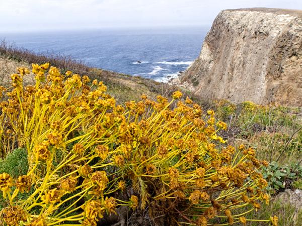 Cali: Channel Islands Coast View